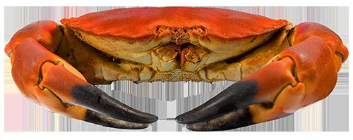 Crab_500px