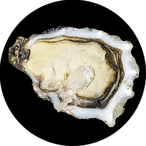 Oysters_Circle_300x300