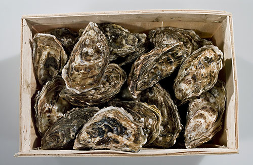Pack-Oyster1_500px
